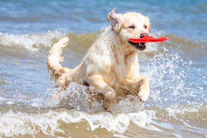 Hund am Hundestrand beim Spielen